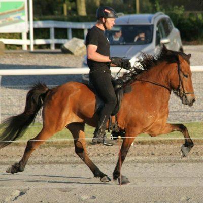 Helga fra Engholm islandsk hest avlshoppe